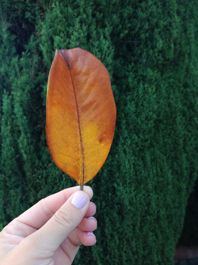 leaf maggie whitley