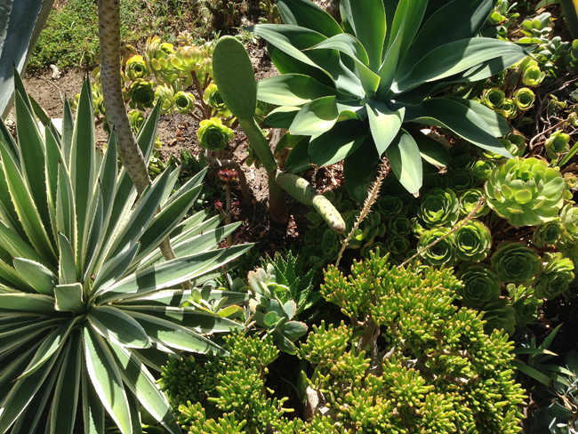 succulents los angeles maggie whitley