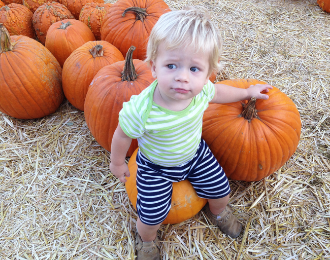 pumpkin patch west hollywood