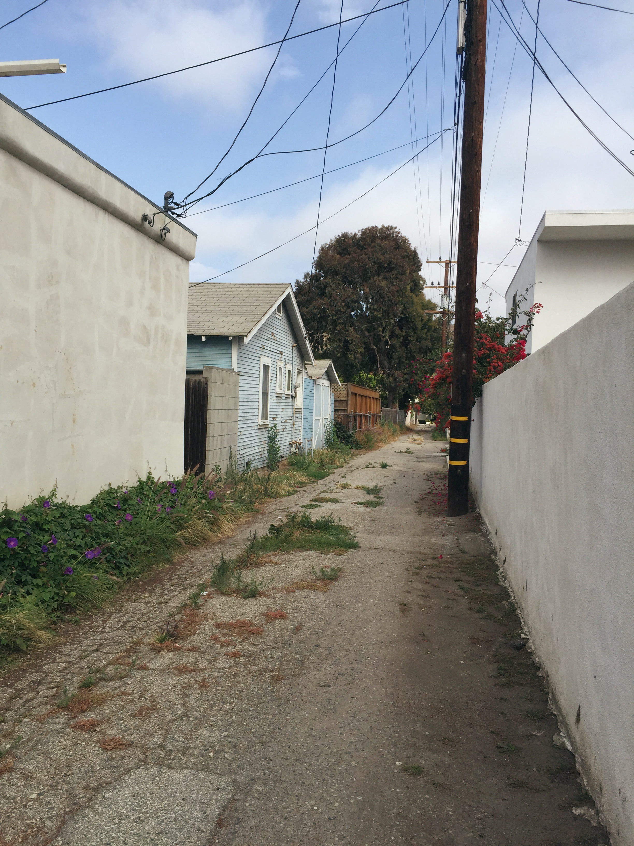 LA alley maggie whitley