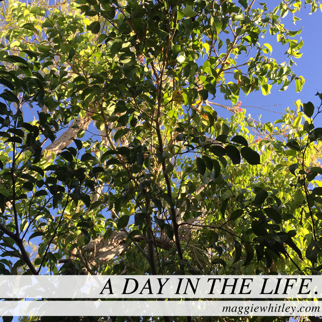 a day in the life | maggie whitley designs